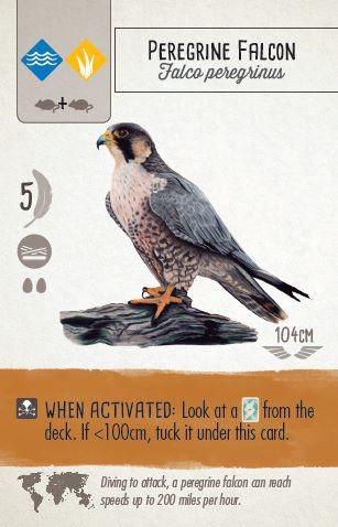 wingspan-faucon