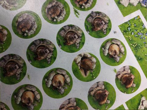 spring-meadow-jeton-marmotte