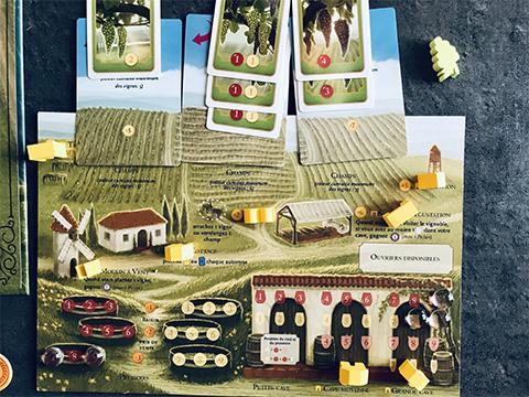 viticulture-photo-14-partie-en-cours